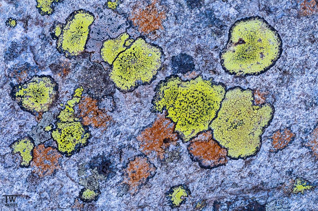 Gesteinsoberfläche auf 2000m Höhe (B1127)