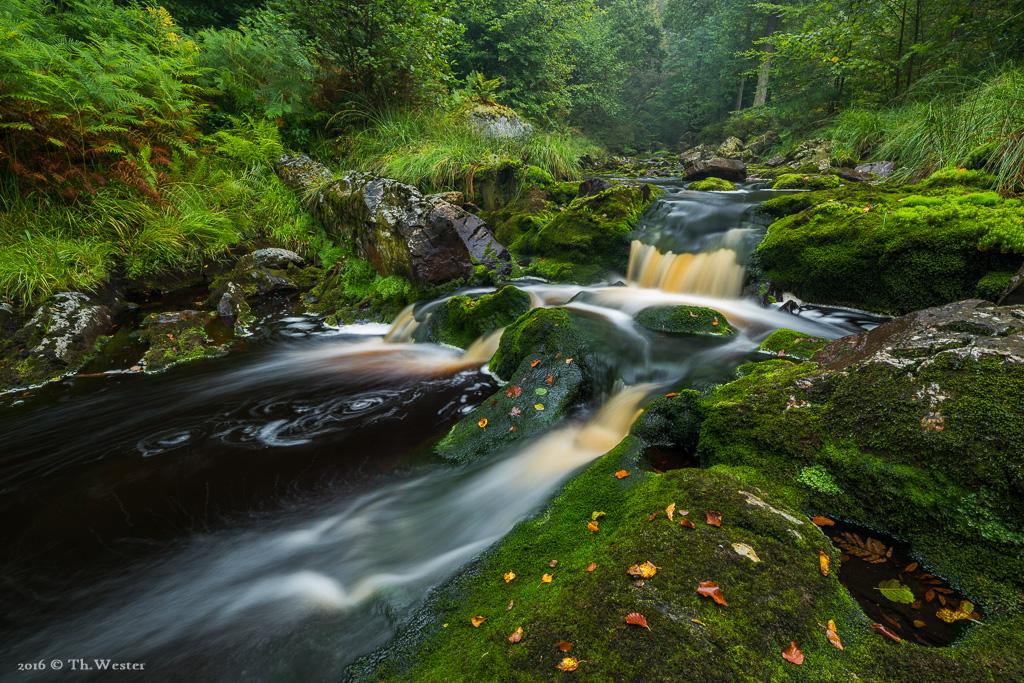 Dieses Bild entstand heute bei Dauerregen: was die Farben der Pflanzen betont und eigentlich ideale Bedingungen für die Flussfotografie bietet (B687)