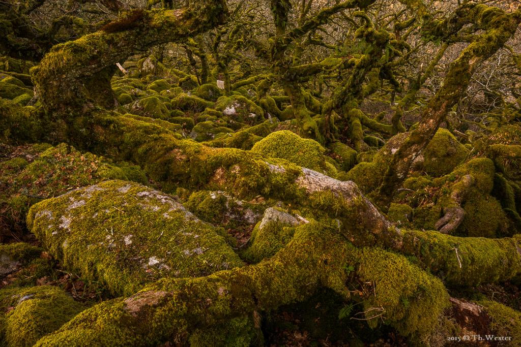 Los geht es wieder mit ein paar Eindrücken aus dem Dartmoor-Nationalpark (B578)