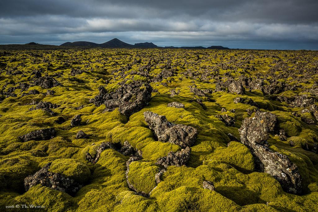Schon auf dem Weg zum ersten Etappenziel beeindruckte die Weite der moosbewachsenen Lava-Landschaft (B738)