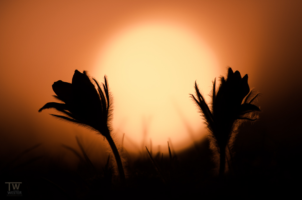 Kurz vor Sonnenuntergang (B915)