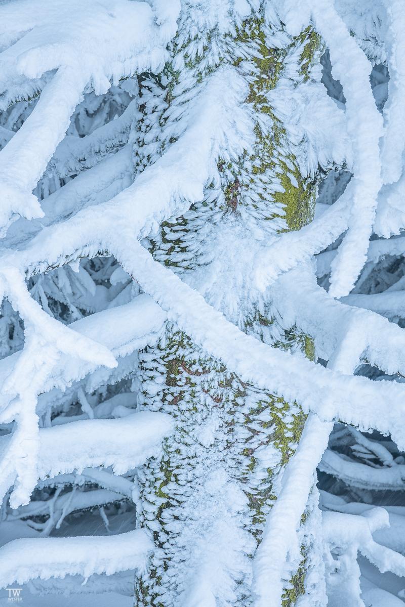 Nach dem Schneesturm… (B2329)