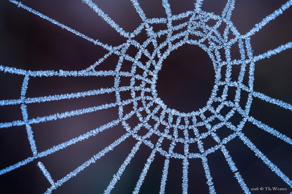 Einige Spinnenarten sind auch zu dieser Zeit noch sehr aktiv und bauen kleine Kunstwerke (B845)