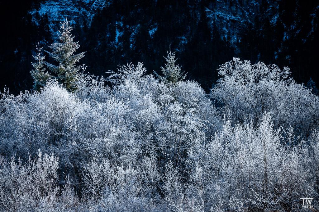 Die Baumgruppen auf den schmalen Inseln der Isar waren komplett gefroren (B1575)