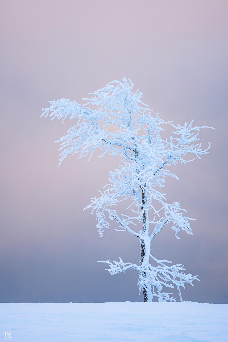 Gepaart mit den Vereisungen haben mich auch hier wieder die Farbkontraste fasziniert, wie so oft bei der Fotografie im Schnee… (B2505)