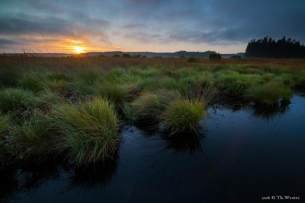 Sonnenaufgang im Hochmoor (B692)