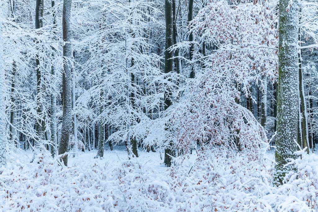 Die Mischung zwischen Herbst- und Schneefarben fand ich toll anzuschauen (B1546)