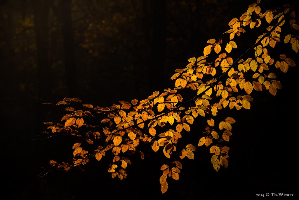 Zum Spätherbst gehören auch goldene Momente (B821)