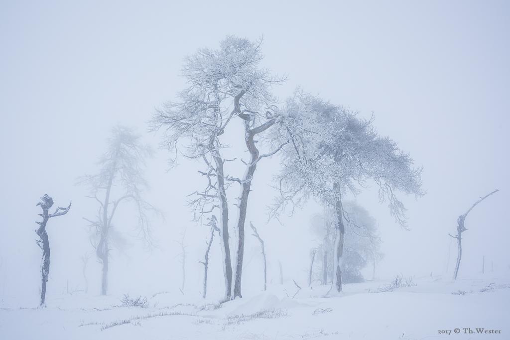 Die Baumgruppe (B882)