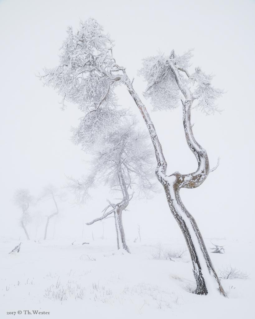 Mein Lieblingsbaum I (B885)