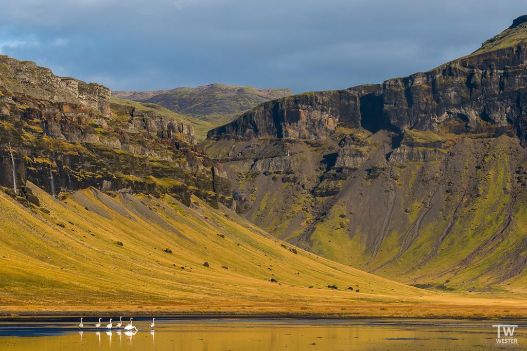 Eine zweite Version eines meiner Lieblingsbilder aus Island: die Singschwäne sind wunderbar (B1211)