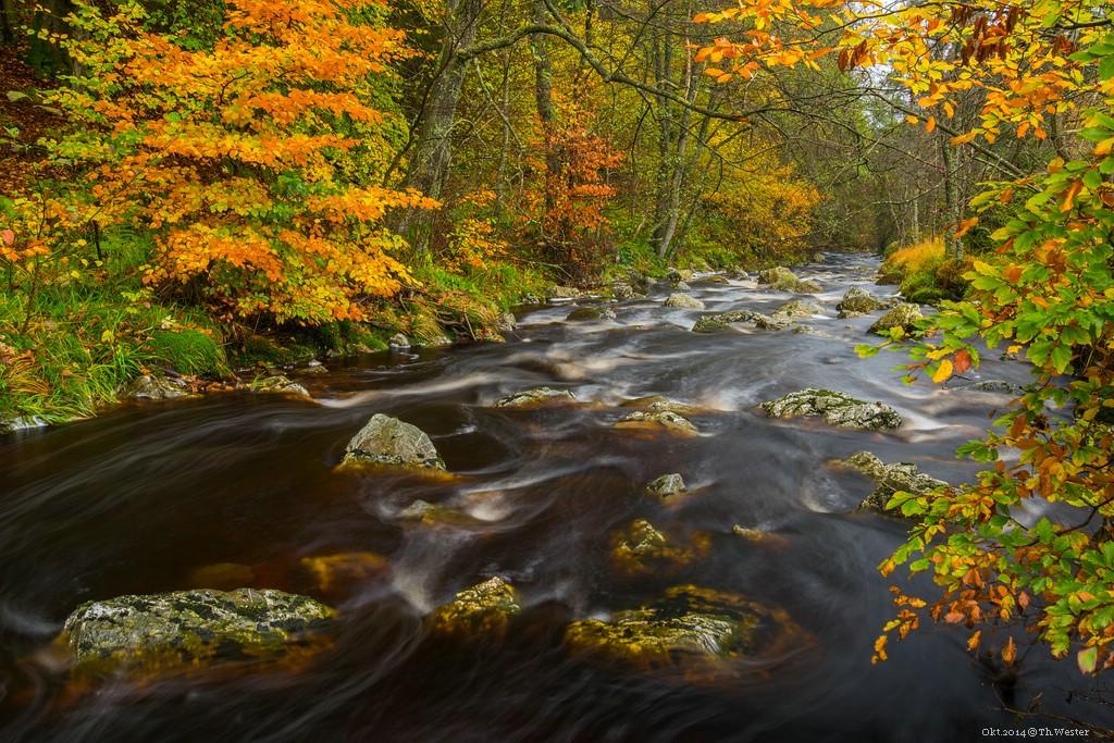 Einfach schöne Herbstfarben (B207)