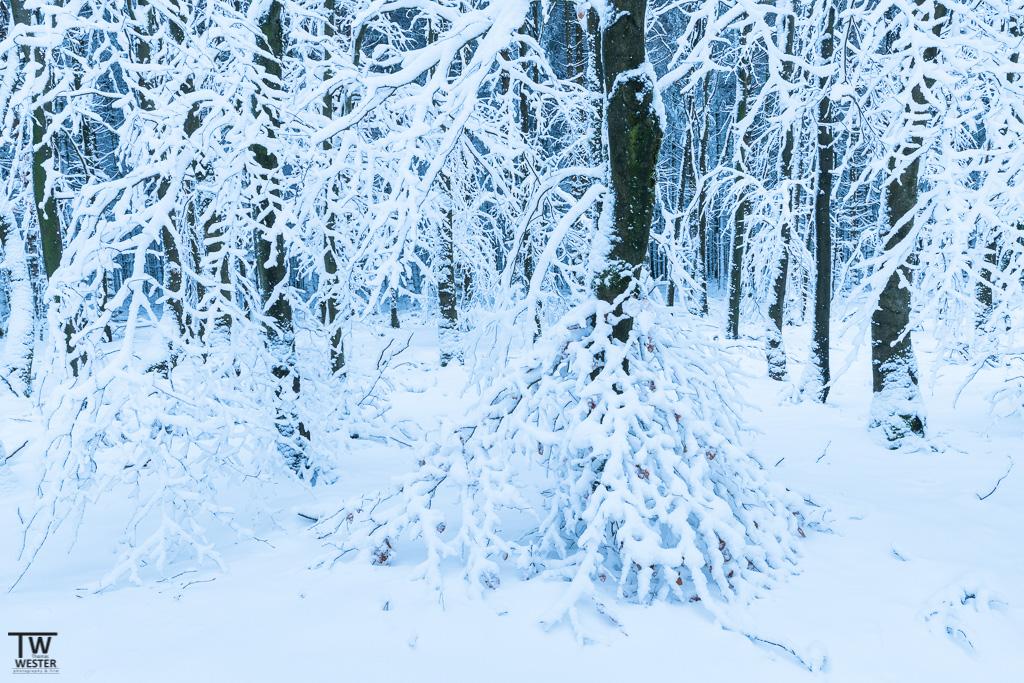 """""""Winterkleid"""" (B1221)"""