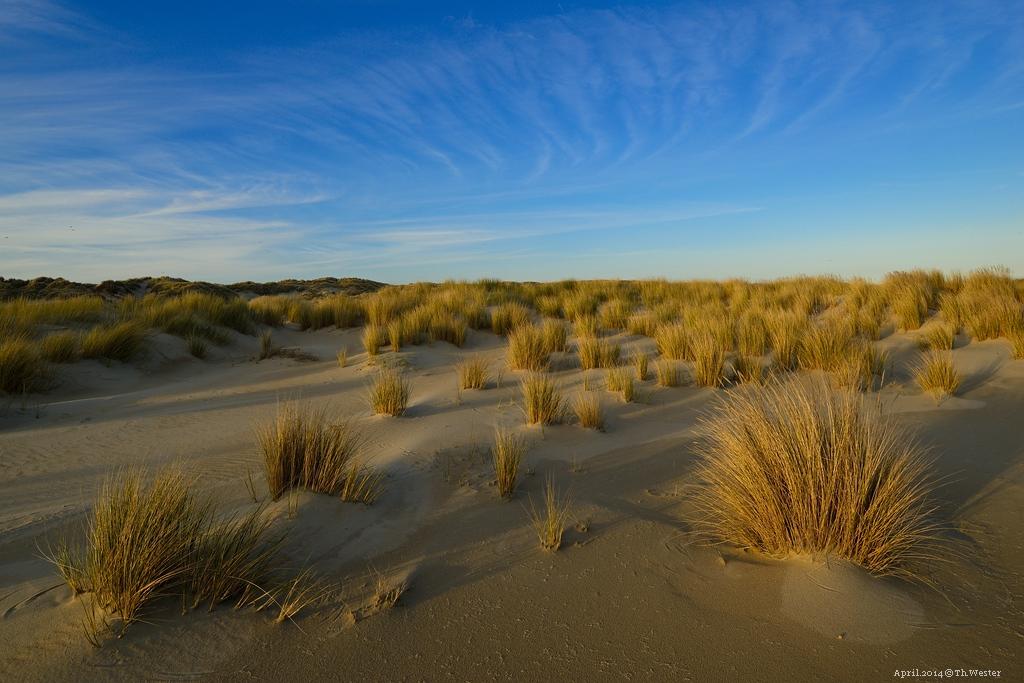 Die Dünen im Südwesten der Insel erstrecken sich auf eine enorme Fläche. Im Abendlicht ist es ein Erlebnis, dort wandern zu gehen (B135)