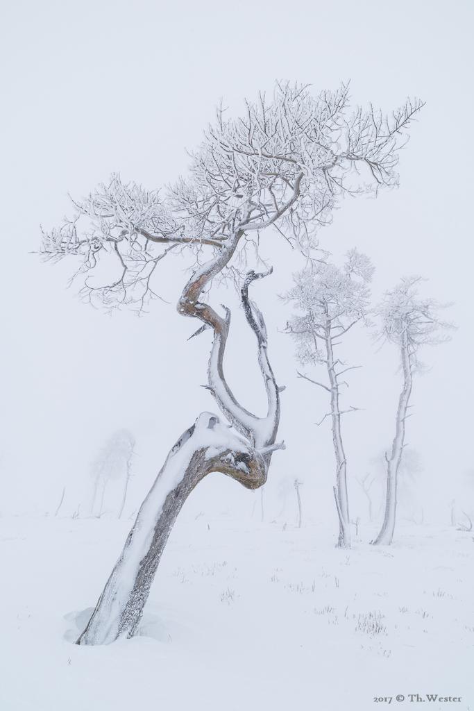 Mein Lieblingsbaum II (B883)