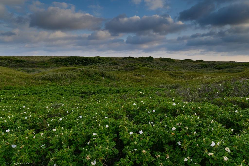 Dünenlandschaft (B172)