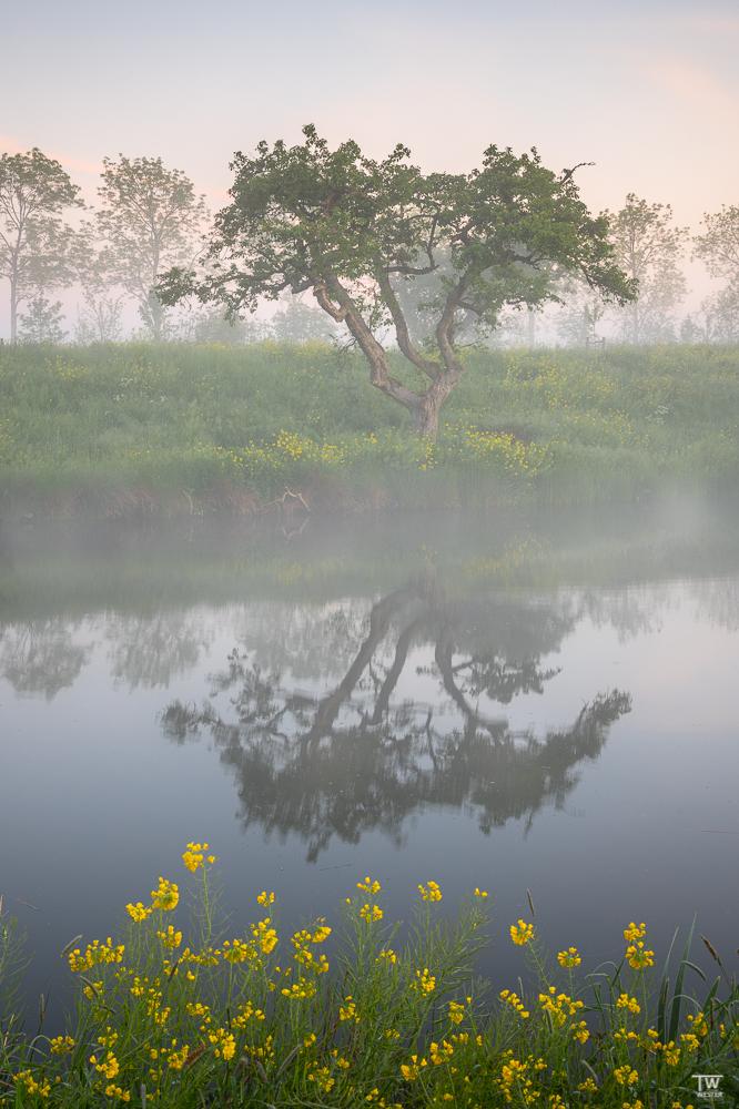 Misty Morning… (B2600)