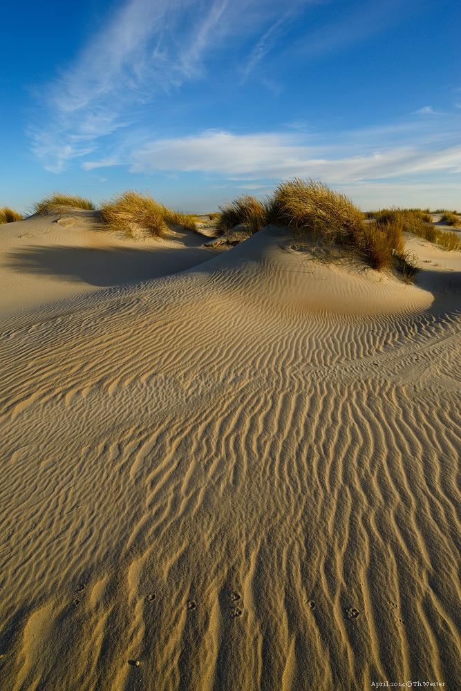Vom Wind gezeichnete Dünenlandschaft (B121)