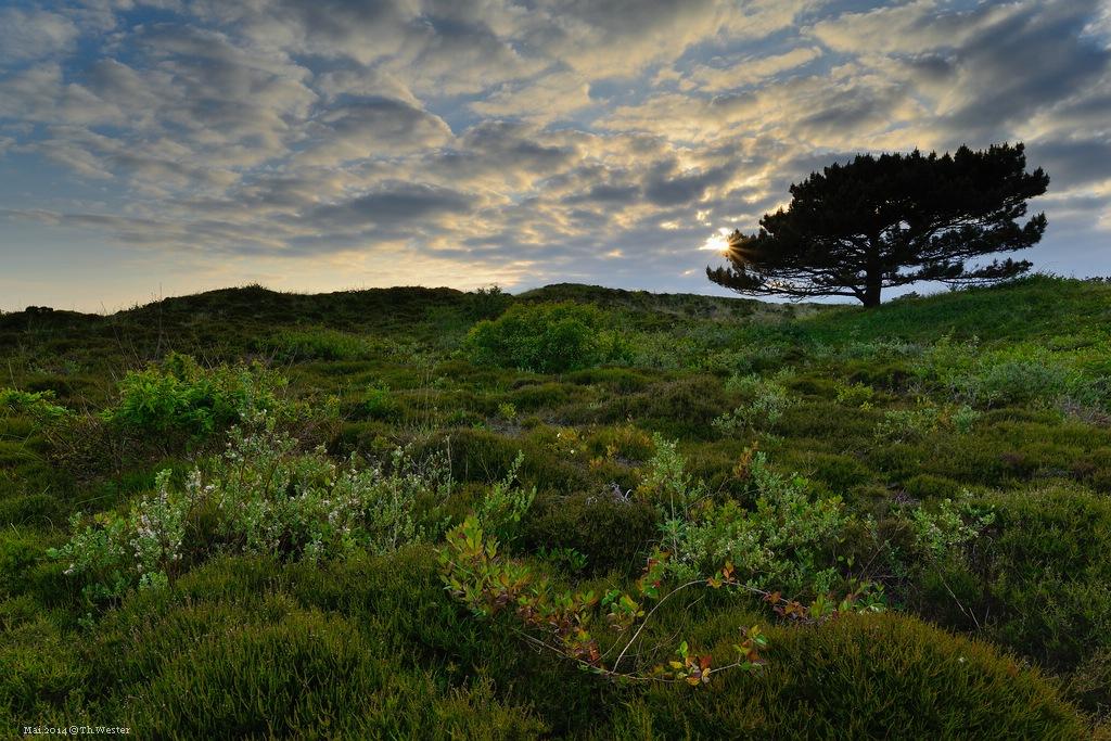 Dünenlandschaft (B147)