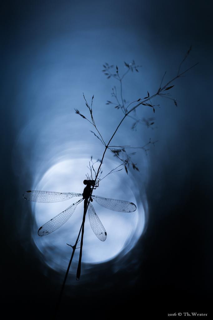Twilight? (B640)
