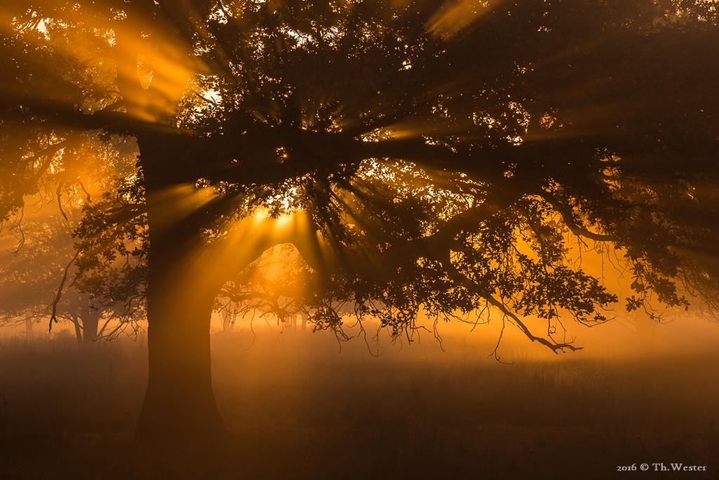 Der goldene Herbst (B753)