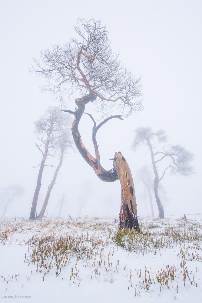 Dieses Bild habe ich mit 15mm Brennweite am Vollformat geschossen und musste mich dabei halb im Schnee verbuddeln ;-) (B250)