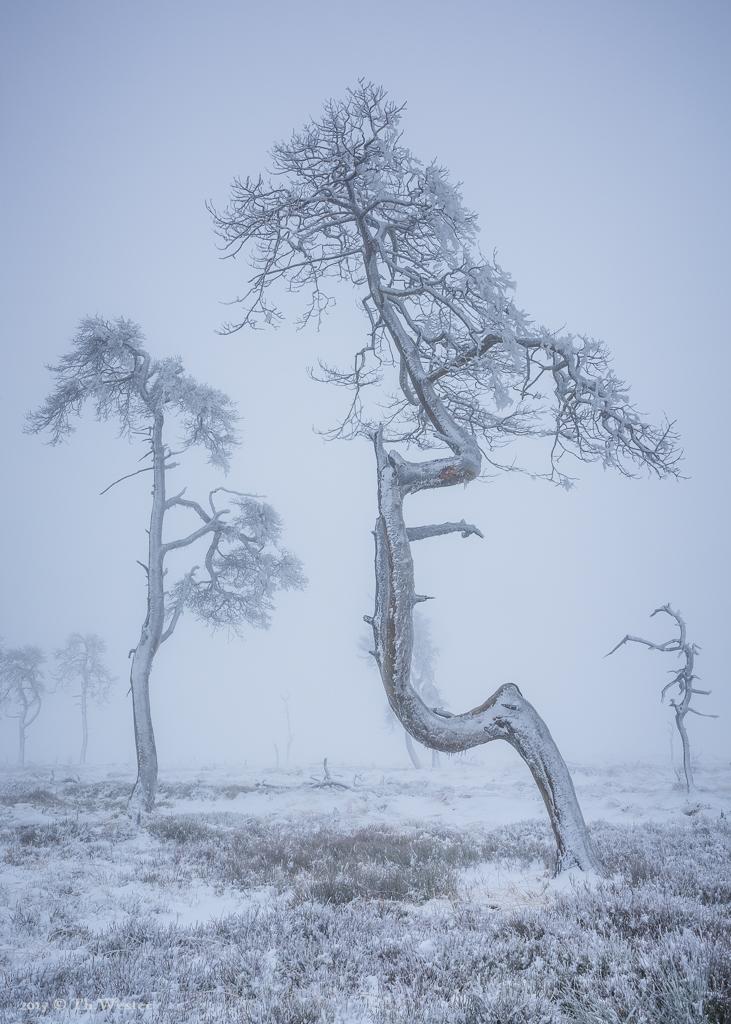 Durch den Nebel war die Stimmung sehr mystisch (B887)