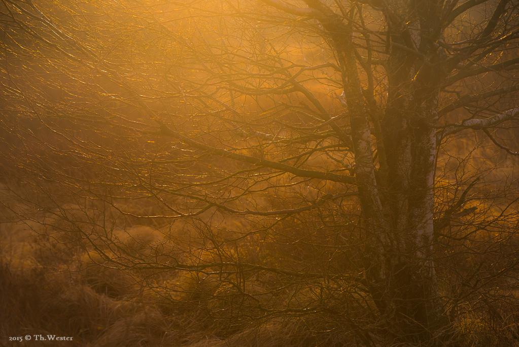 Morgenlicht (B417)