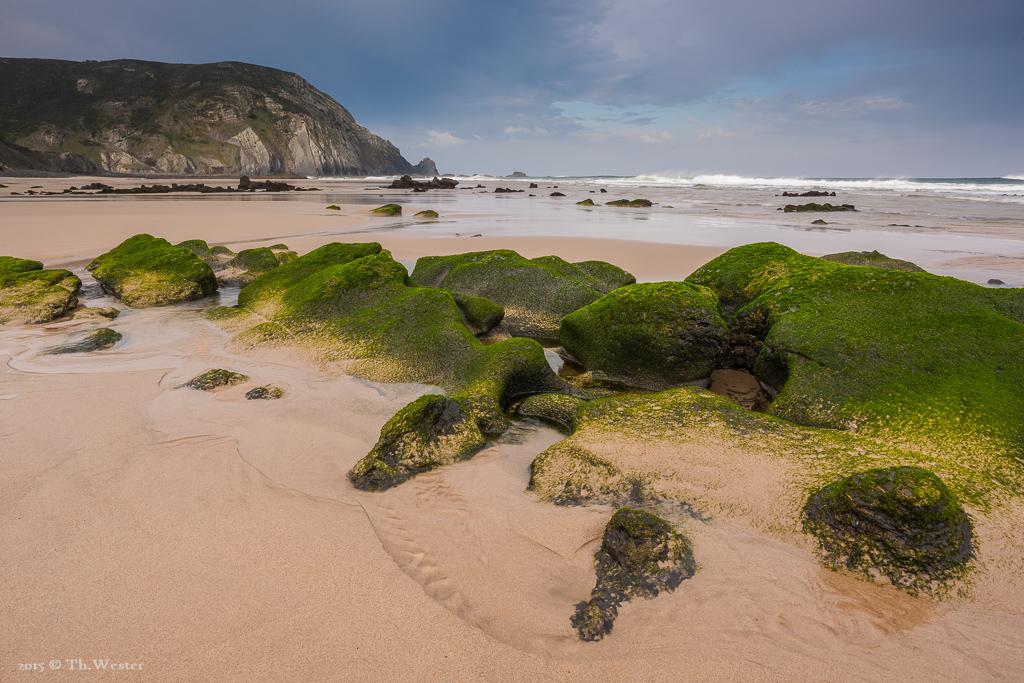 Noch ein Bild der mit Algen bewachsenen Felsen bei Ebbe (B288)