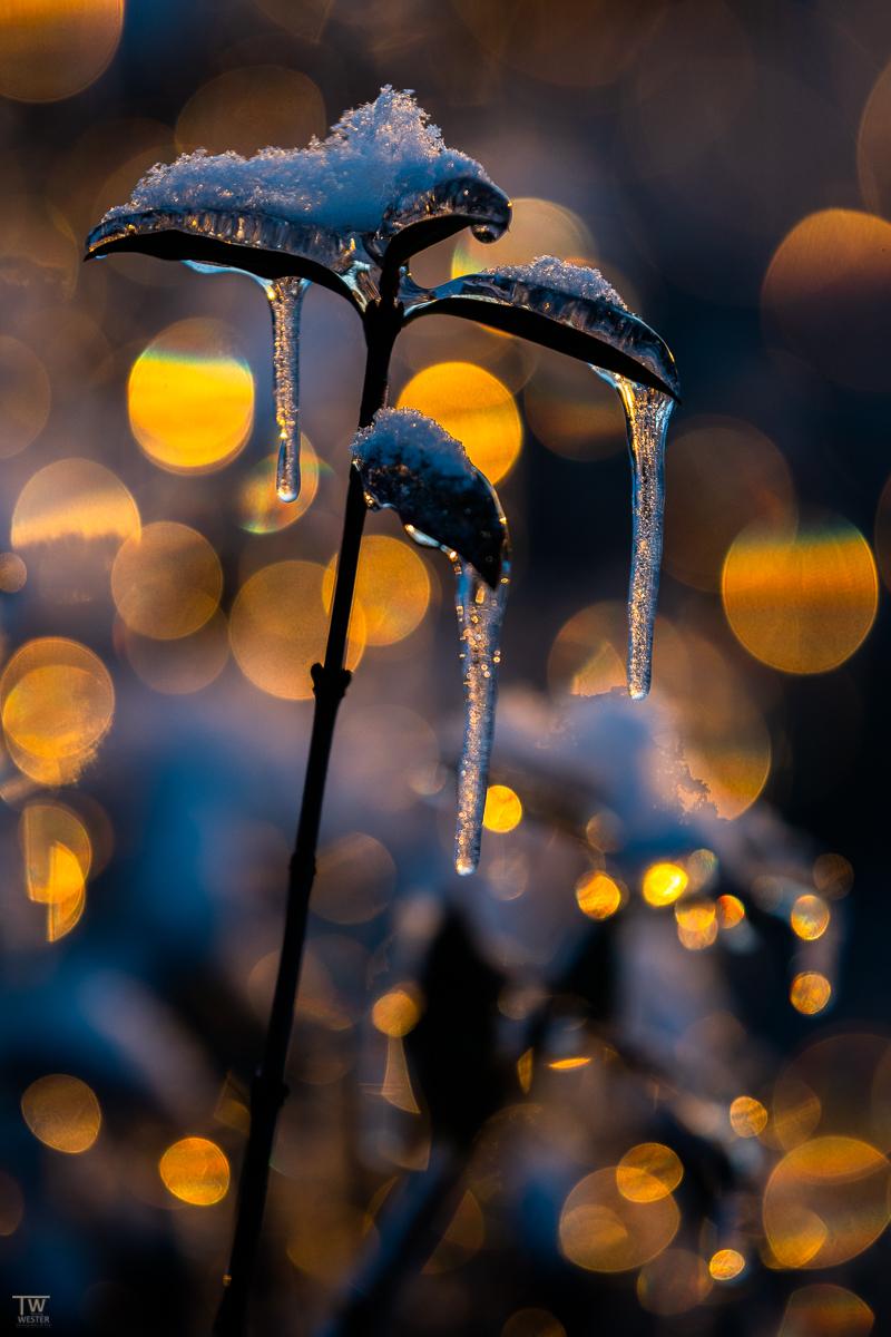 Leuchtendes Eis (B2466)