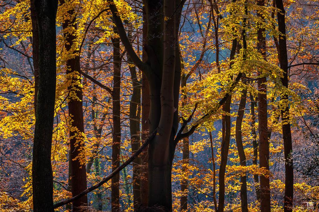 Farbkontraste im Abendlicht (B1841)