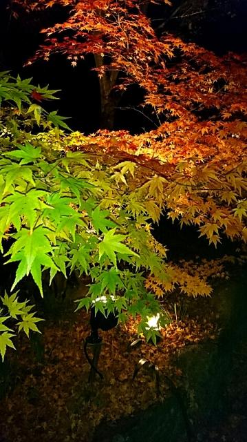 夜の紅葉のライトアップ