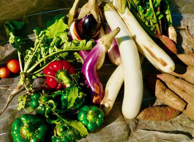 梅雨,バテ,解消,夏野菜