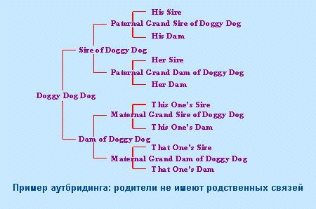 Контроль наследственных заболеваний у собак