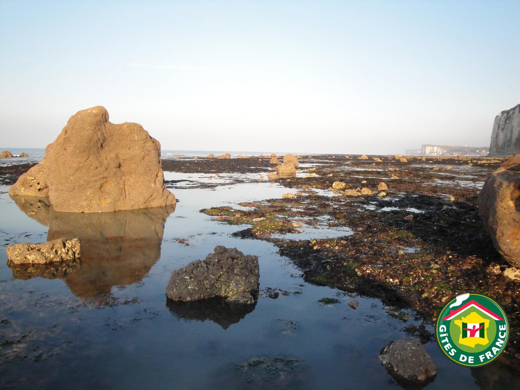 Veulettes sur mer Estran rocheux