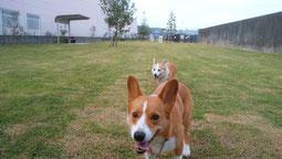 犬の車椅子 犬用車椅子 犬の車いす 犬用車いす 犬 車椅子 ドッグカート 歩行器 車椅子犬 クララワークス 湯河原町