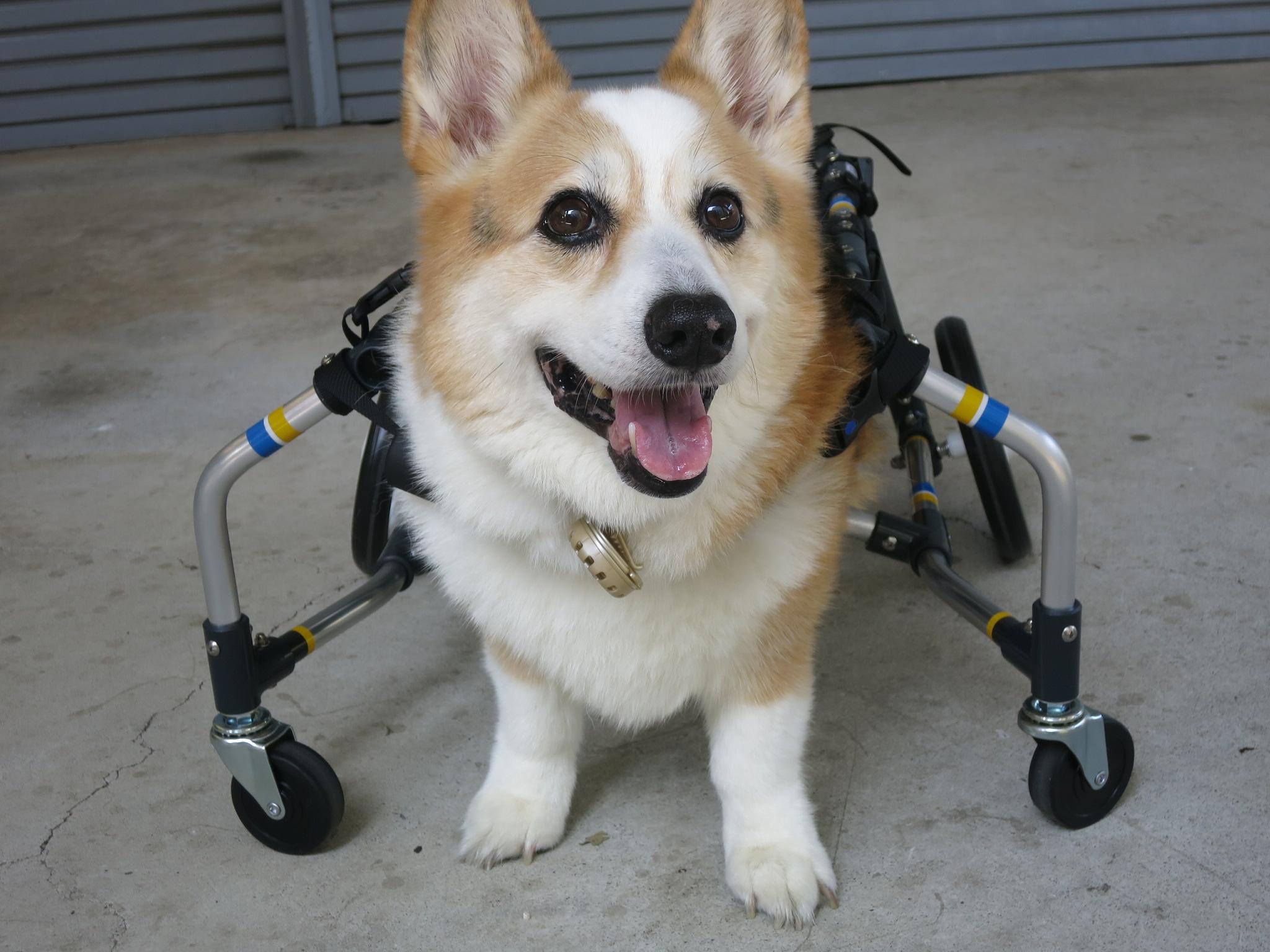 犬の車いす工房 クララワークス