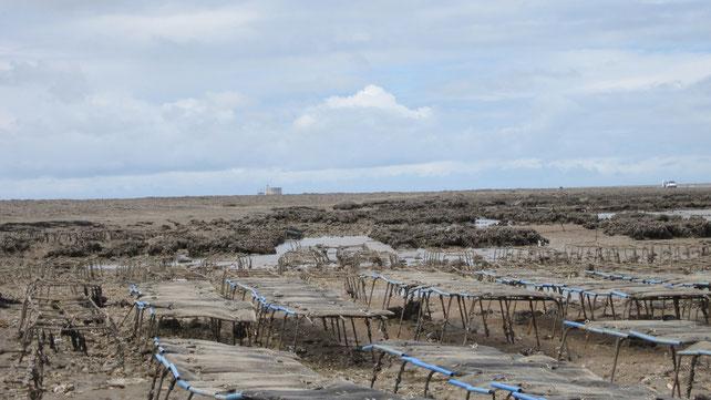 Tables ostréicoles à marée basse devant l'île Madame