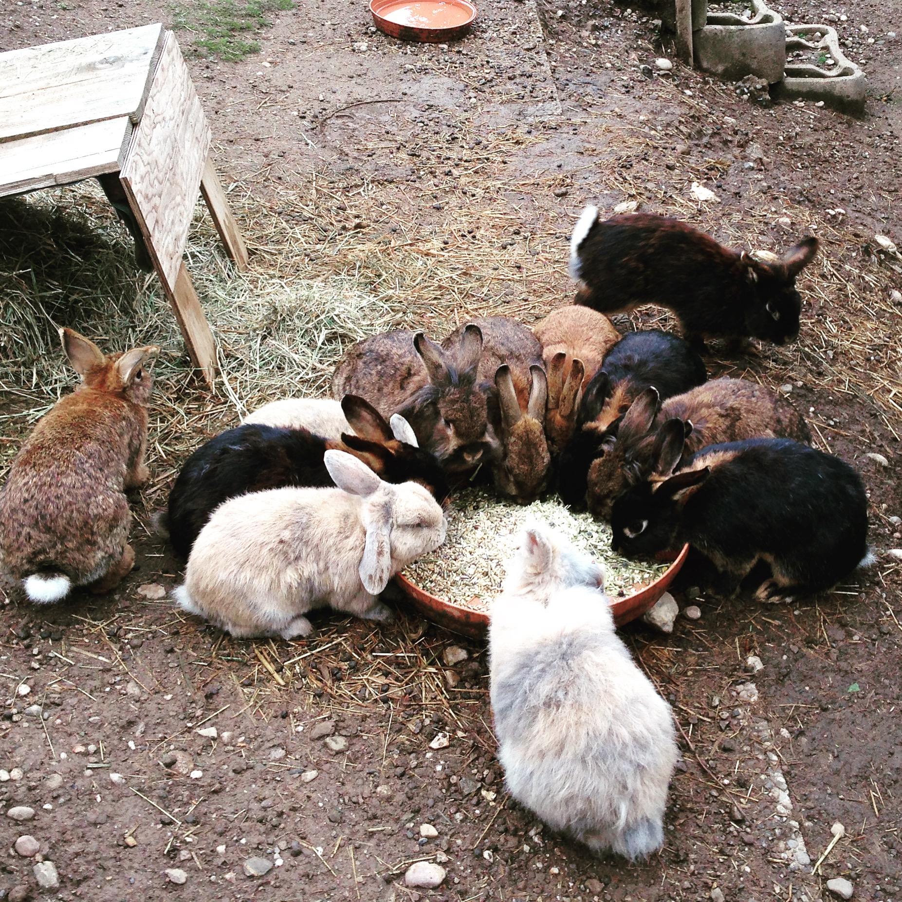 Kaninchen Familie