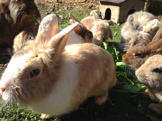 Kaninchen Familie (Marder…)
