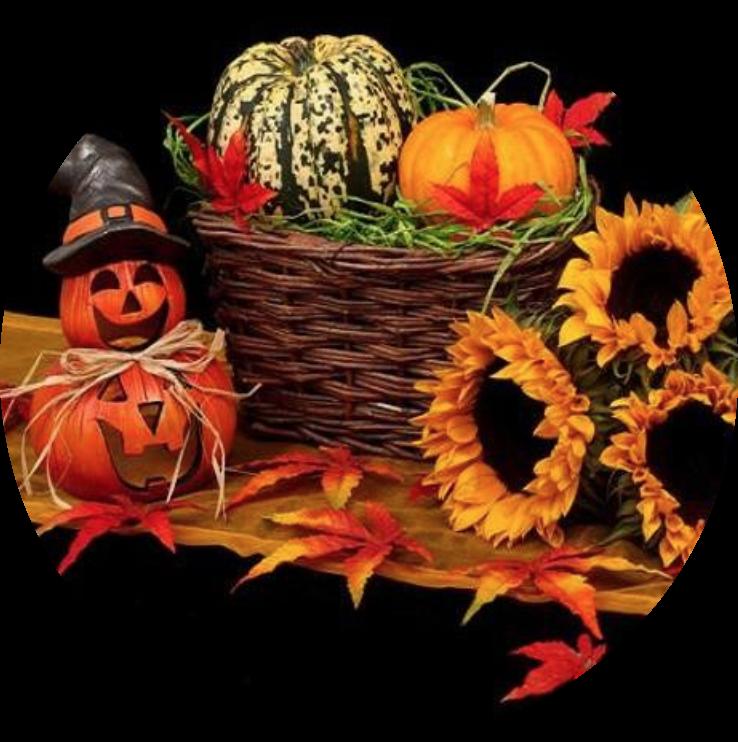 Les Soins de Novembre pour nous accompagner