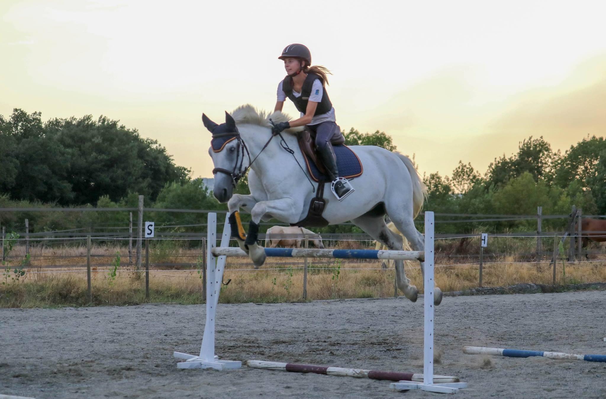 Hunter équitation