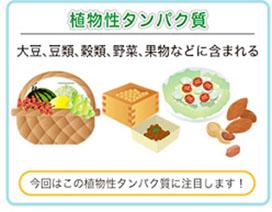 植物性タンパク質を多く含む食品