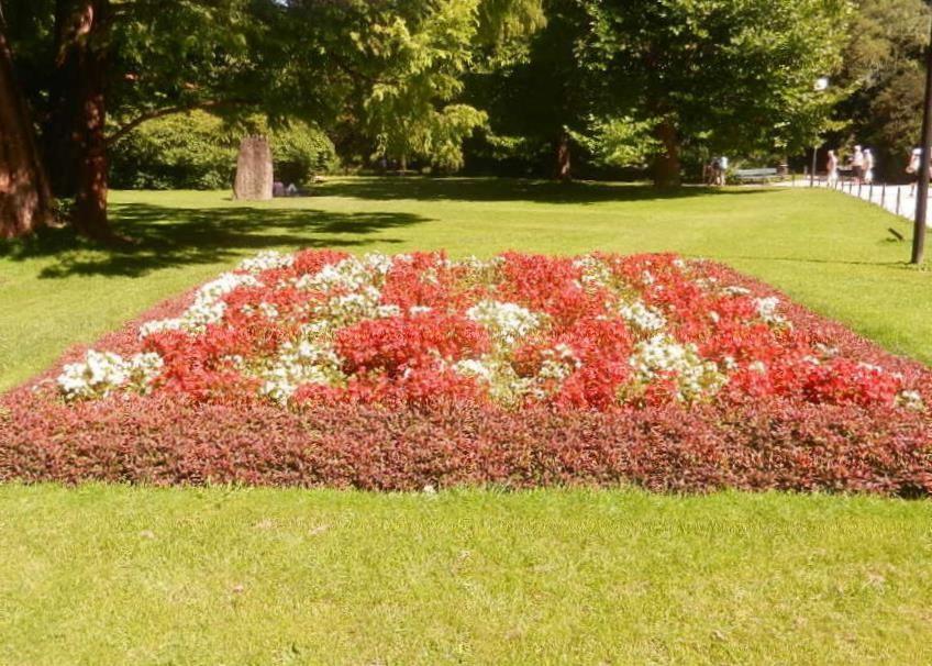 Sommer im Hofgarten