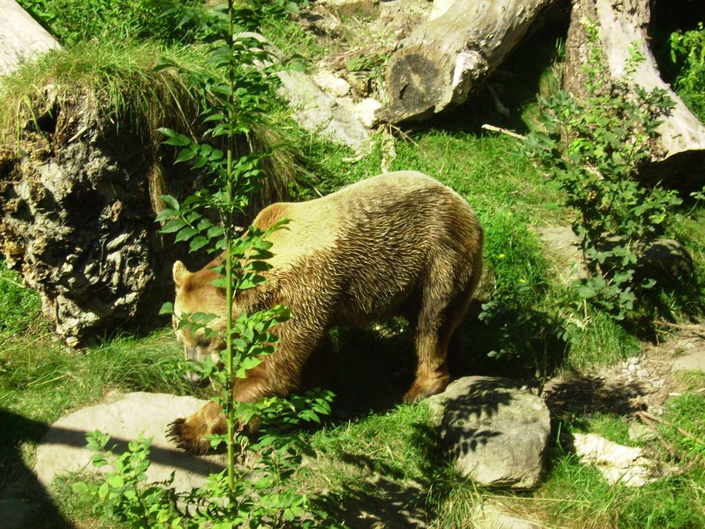 Bärenmännchen