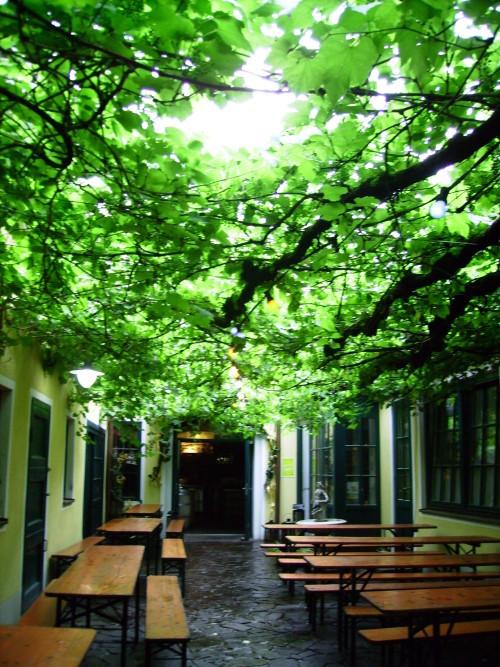 Blätterdach aus dem Weinrebenstock