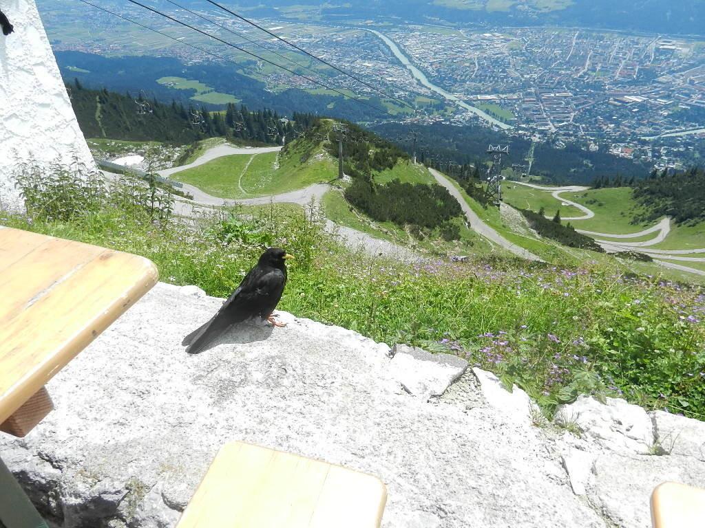 Blick v.d. Seegrube auf Innsbruck