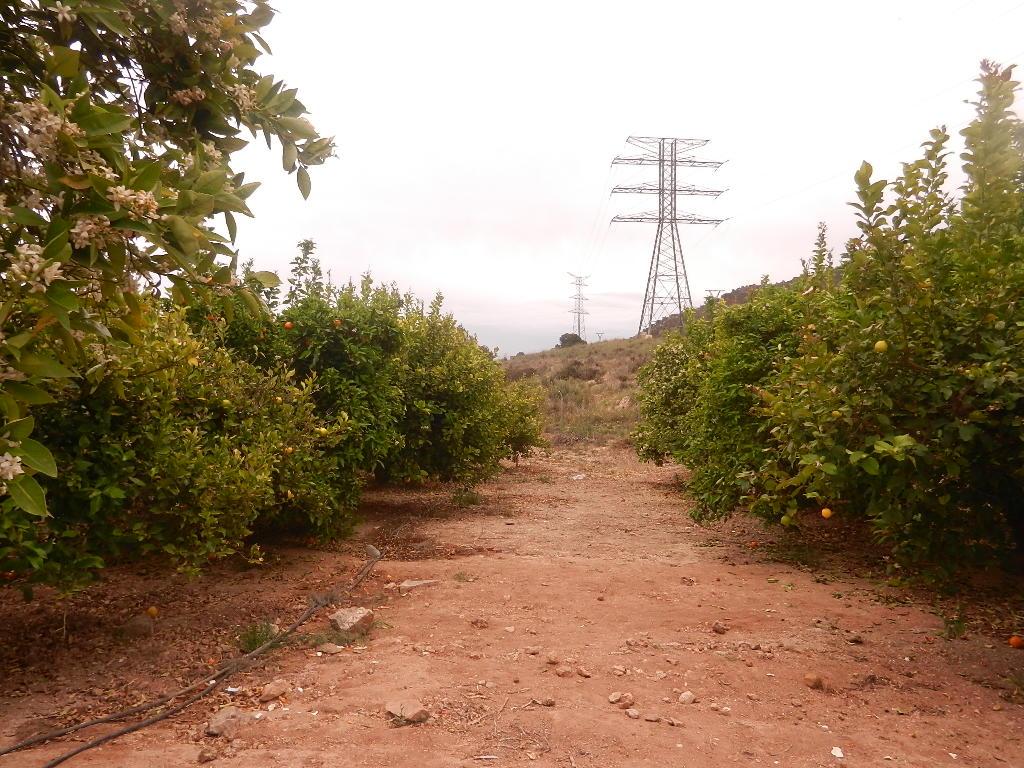 In der Orangenplantage - man konnte so viele Orangen pflücken - wie man wollte -u.natürlich mitnehmen :-)