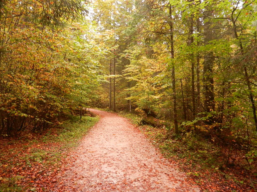 Wanderung durch eine traumhafte Herbstlandschaft