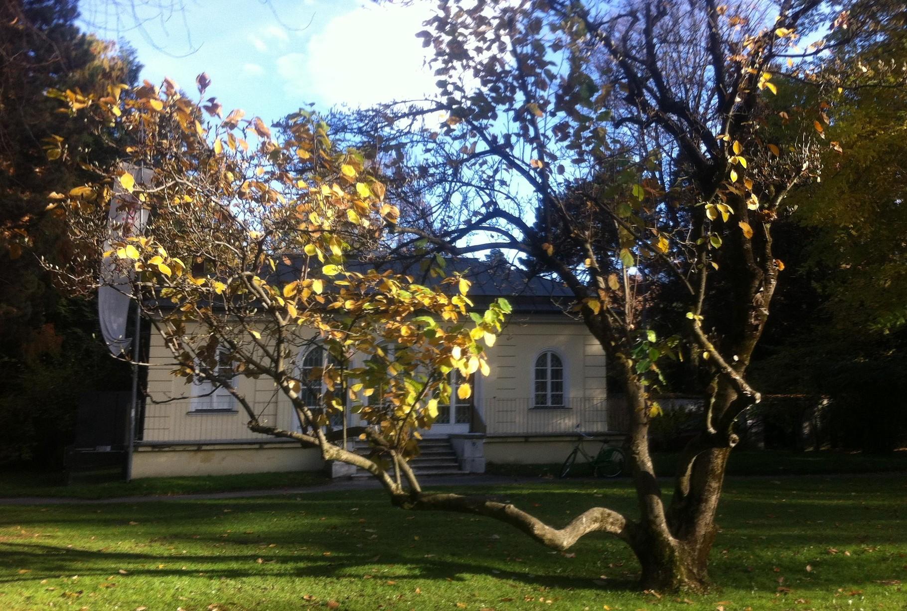 Anfang November 2015 im Hofgarten